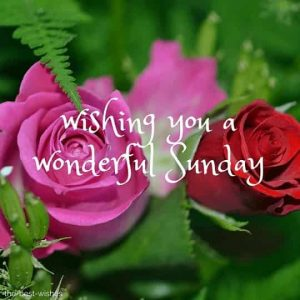Best Wishes For Sunday Morning